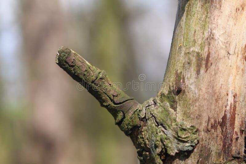 Αντίχειρες επάνω, ξύλινοι στοκ εικόνα με δικαίωμα ελεύθερης χρήσης