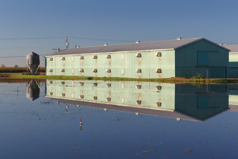 Αντανάκλαση αγροτικού κτηρίου, έλος των βακκίνιων στοκ φωτογραφίες με δικαίωμα ελεύθερης χρήσης