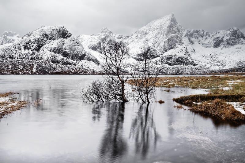 Αντανάκλαση δέντρων στη λίμνη μπροστά από μια σειρά χειμερινών βουνών στοκ εικόνα