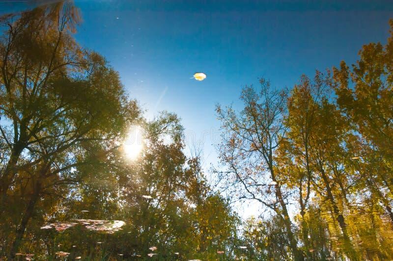 Αντανάκλαση στο νερό Ηρεμία φθινοπώρου στην αντανάκλαση λιμνών των δέντρων στοκ εικόνες με δικαίωμα ελεύθερης χρήσης