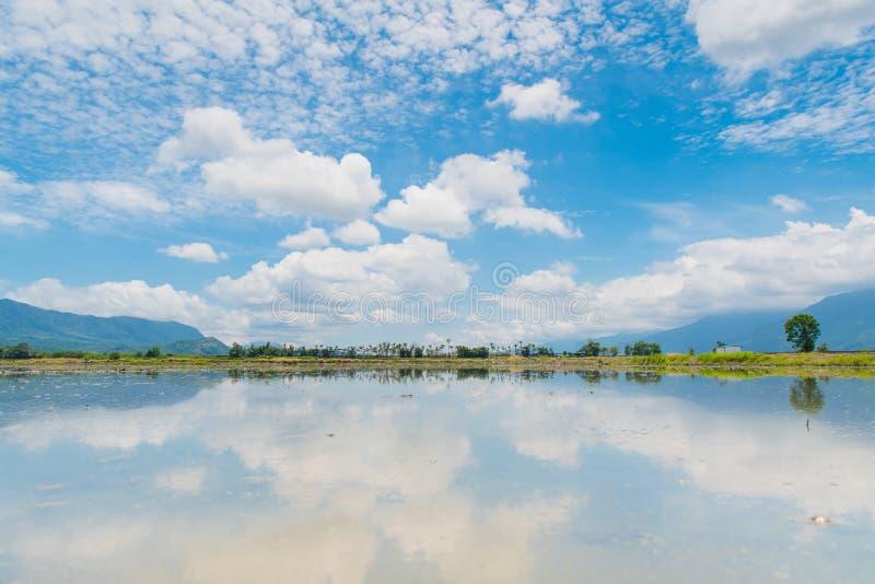 Αντανάκλαση των τομέων ορυζώνα, όμορφο φυσικό τοπίο των πράσινων τομέων ρυζιού σε αγροτικό Chishang, Taitung, Ταϊβάν στοκ εικόνες με δικαίωμα ελεύθερης χρήσης