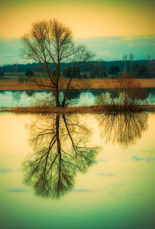Αντανάκλαση δέντρων στο ύδωρ στοκ φωτογραφίες με δικαίωμα ελεύθερης χρήσης