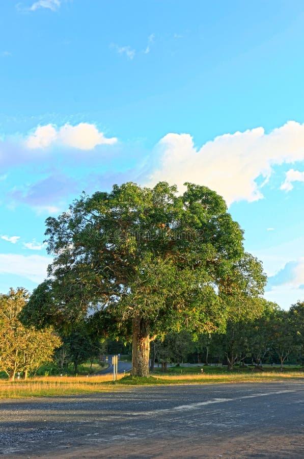 Αντανάκλαση του δέντρου πεύκων σε μια λίμνη, εθνικό πάρκο Khaoyai Yai, Ταϊλάνδη στοκ εικόνες