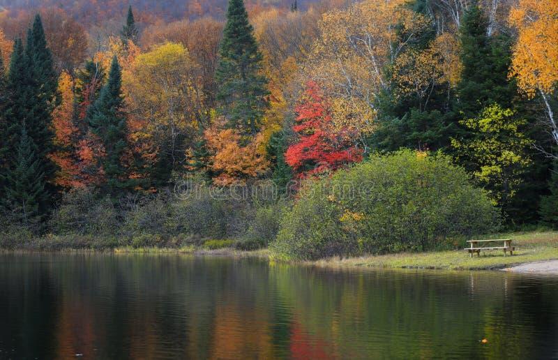 Αντανακλάσεις δέντρων φθινοπώρου στη συνομιλία λάκκας στο εθνικό πάρκο Mont Tremblant στοκ εικόνα