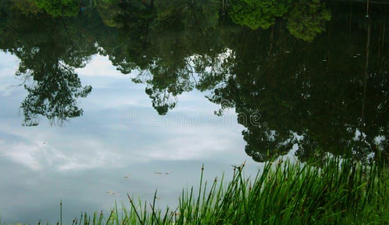 Αντανακλάσεις δέντρων Hill στη λίμνη kodaikanal στοκ εικόνες με δικαίωμα ελεύθερης χρήσης
