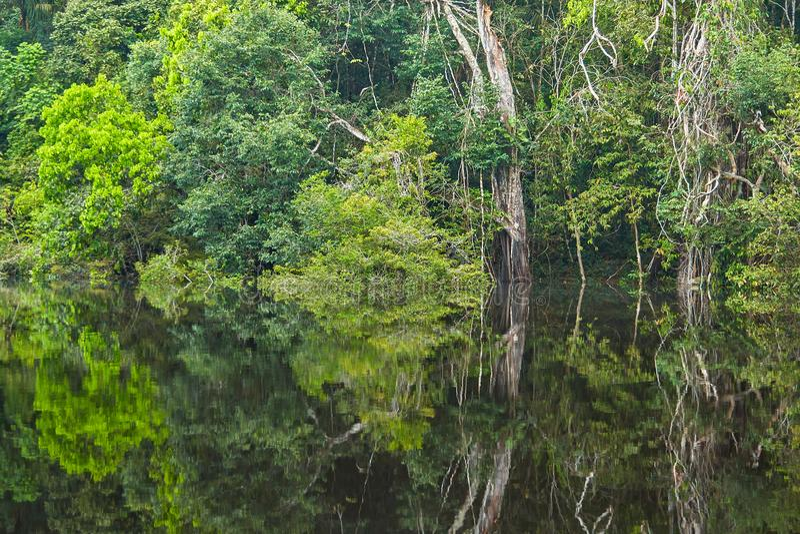Αντανακλάσεις τροπικών δασών του Αμαζονίου στοκ φωτογραφίες με δικαίωμα ελεύθερης χρήσης