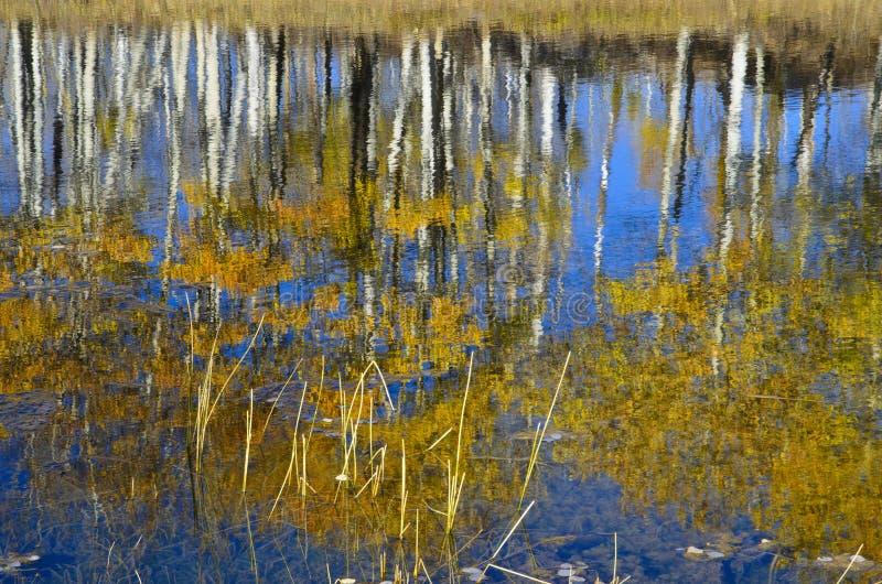 αντανακλάσεις φθινοπώρου στοκ φωτογραφίες με δικαίωμα ελεύθερης χρήσης