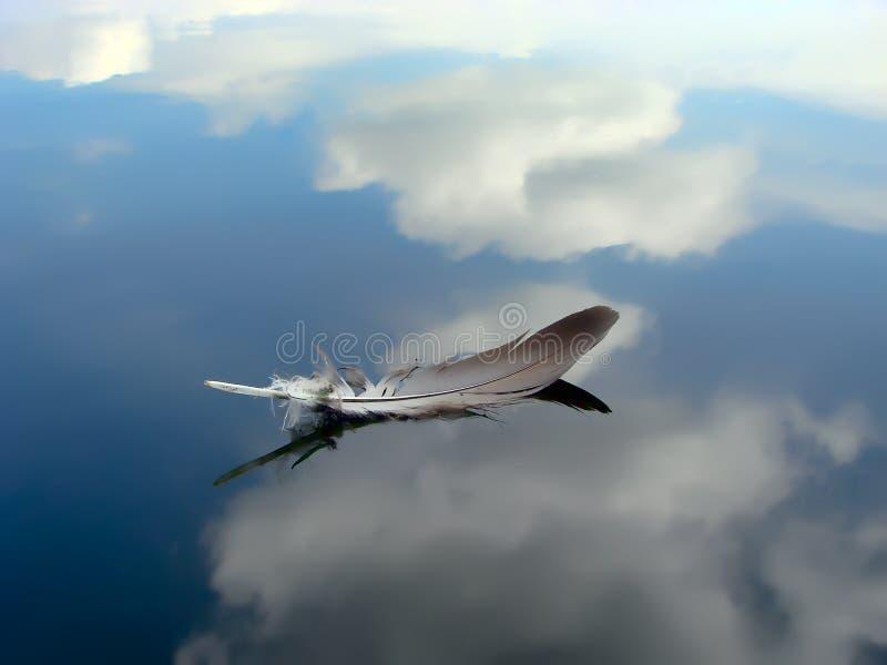 αντανακλάσεις φτερών στοκ φωτογραφίες