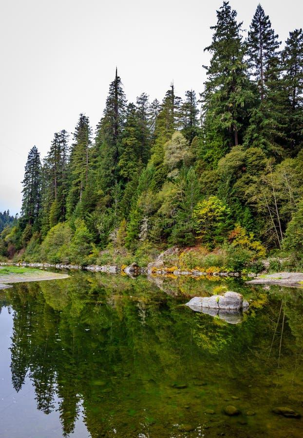 Αντανακλάσεις Redwood στοκ φωτογραφίες με δικαίωμα ελεύθερης χρήσης