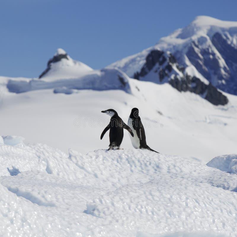 Ανταρκτική ακτή στοκ εικόνα