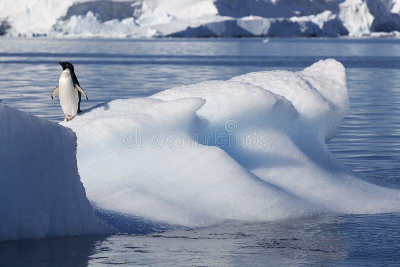 Ανταρκτική ακτή στοκ φωτογραφία