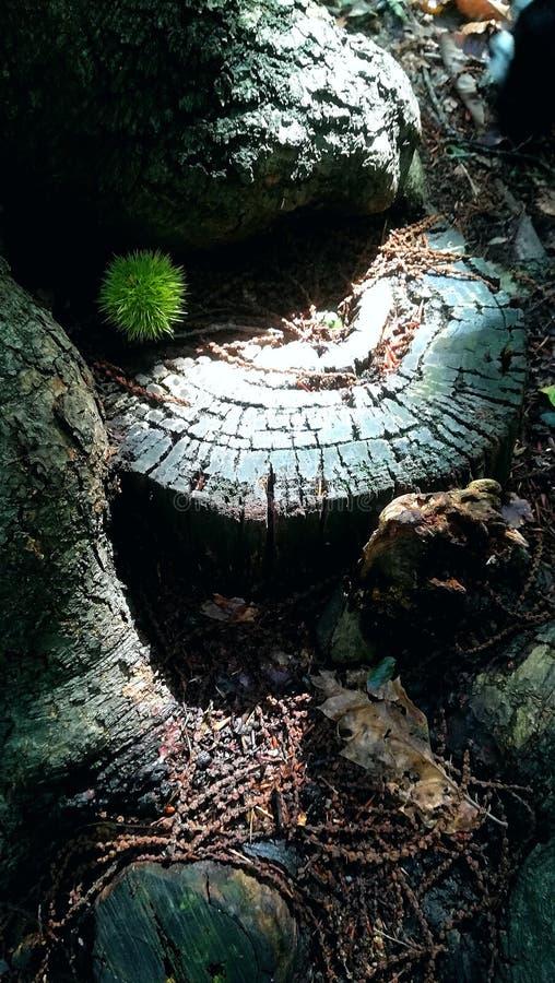Αντιπαραβαλλόμενη εικόνα ενός δάσους ina ρύθμισης φθινοπώρου στοκ εικόνες