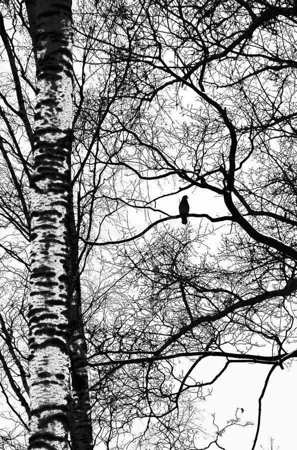 Αντιπαραβαλλόμενο τοπίο με ένα πουλί στοκ εικόνες