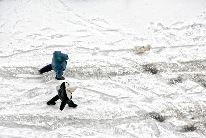 Ανυψωμένη άποψη του ζεύγους ανδρών και γυναικών που περπατά με το σκυλί παγωμένος στοκ εικόνα με δικαίωμα ελεύθερης χρήσης