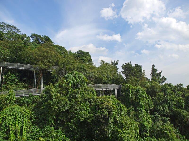 ανυψωμένη διάβαση πεζών Σιν& στοκ εικόνα