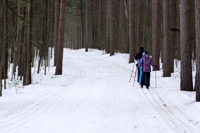 Ανώμαλο να κάνει σκι στα ξύλα στοκ εικόνες με δικαίωμα ελεύθερης χρήσης