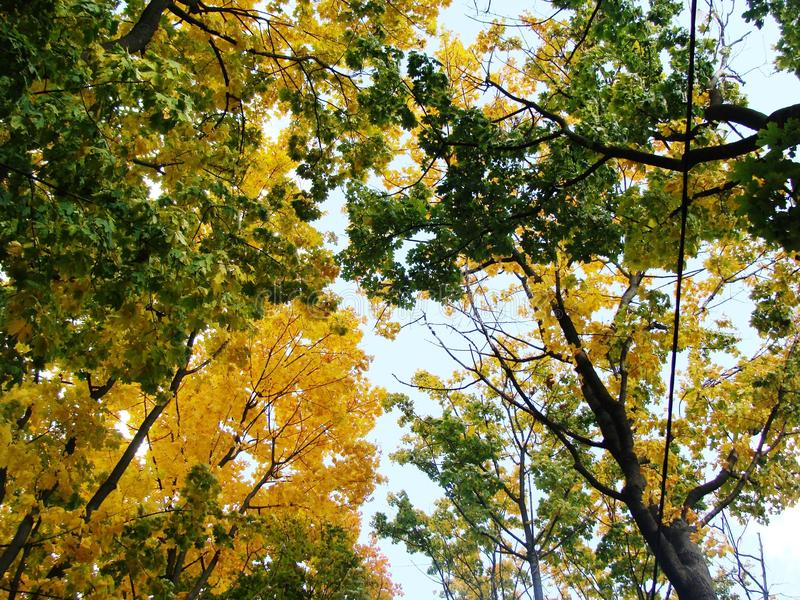 ανώτατα δέντρα στοκ φωτογραφίες με δικαίωμα ελεύθερης χρήσης