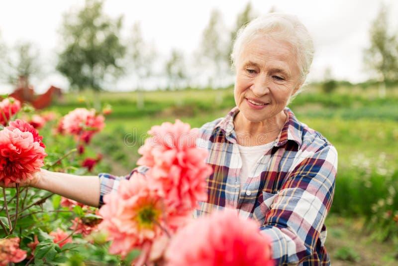 Ανώτερη γυναίκα με τα λουλούδια στο θερινό κήπο στοκ εικόνα με δικαίωμα ελεύθερης χρήσης