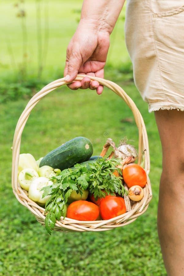 Ανώτερη γυναίκα που κρατά ένα καλάθι με τα λαχανικά στοκ εικόνες