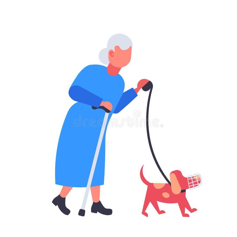 Ανώτερη γυναίκα που περπατά με το σκυλί στη γιαγιά ρυγχών και το ζωικό  ελεύθερη απεικόνιση δικαιώματος