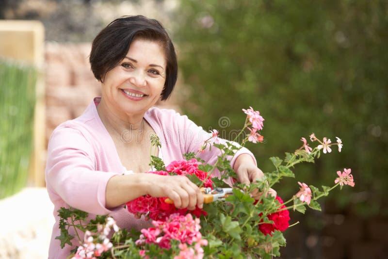 Ανώτερη ισπανική γυναίκα που εργάζεται στα δοχεία τακτοποίησης κήπων στοκ φωτογραφίες