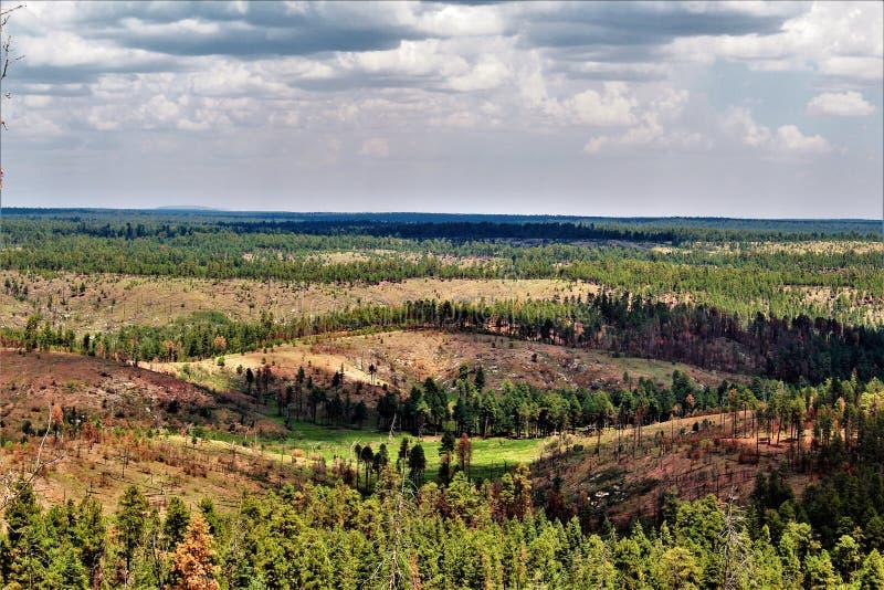 Ανώτερη προοπτική, εθνικό δρυμός Apache Sitgreaves, Αριζόνα, Ηνωμένες Πολιτείες στοκ εικόνα