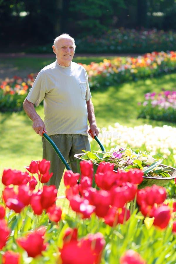 Ανώτερος κηπουρός στην εργασία στοκ φωτογραφία με δικαίωμα ελεύθερης χρήσης
