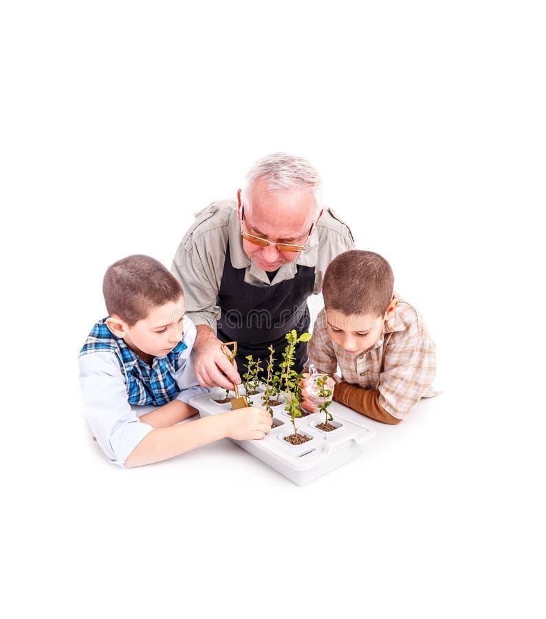 Ανώτερο άτομο με τα εγγόνια του στοκ εικόνες