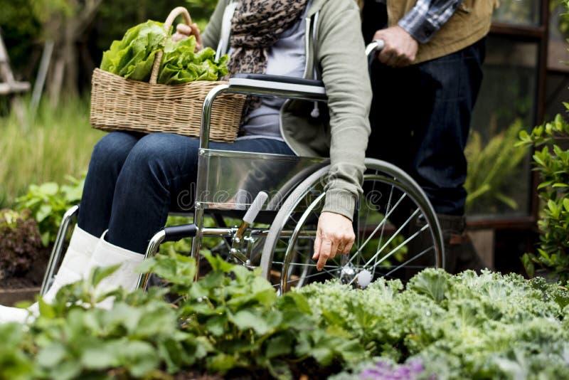 Ανώτερο ενήλικο λαχανικό επιλογής ζευγών από τον κήπο κατωφλιών στοκ εικόνες με δικαίωμα ελεύθερης χρήσης