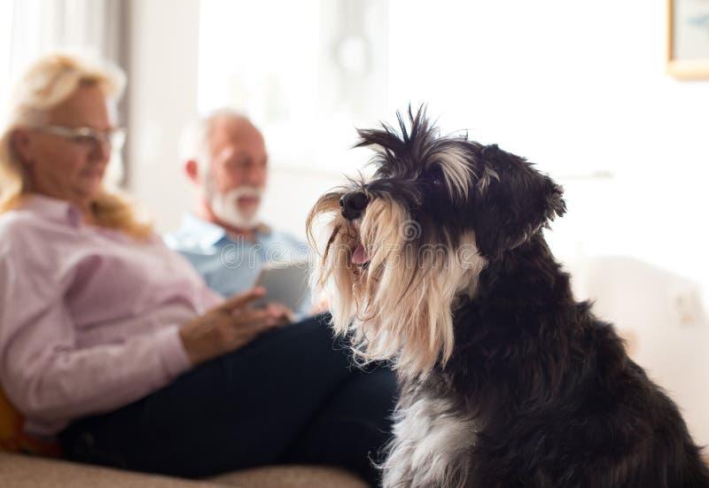 Ανώτερο ζεύγος με το σκυλί στο σπίτι στοκ φωτογραφίες