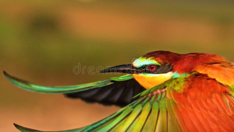 Απίστευτο πουλί κατά την πτήση στοκ εικόνες