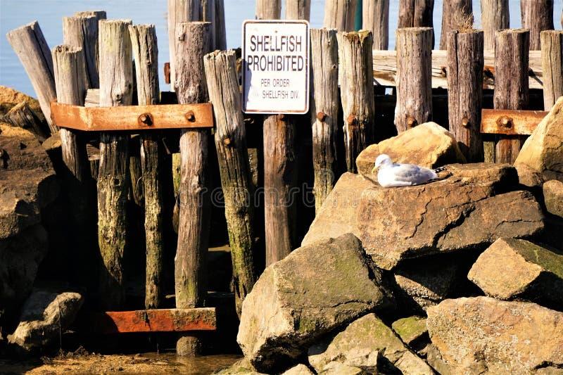 Απαγορευμένο οστρακόδερμα σημάδι δίπλα seagull στήριξης στοκ φωτογραφίες