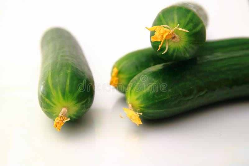 Απαλά αναδιπλωμένα πράσινα αγγούρια Νωπή συγκομιδή από την εκμετάλλευση στοκ εικόνα