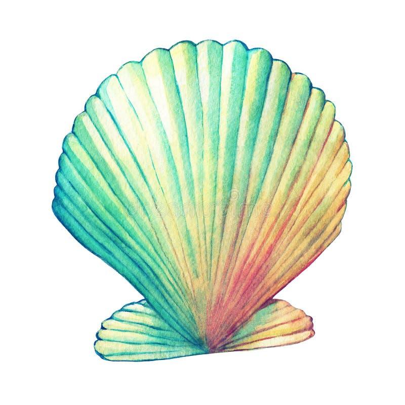 Απεικονίσεις των κοχυλιών θάλασσας Θαλάσσιο σχέδιο διανυσματική απεικόνιση