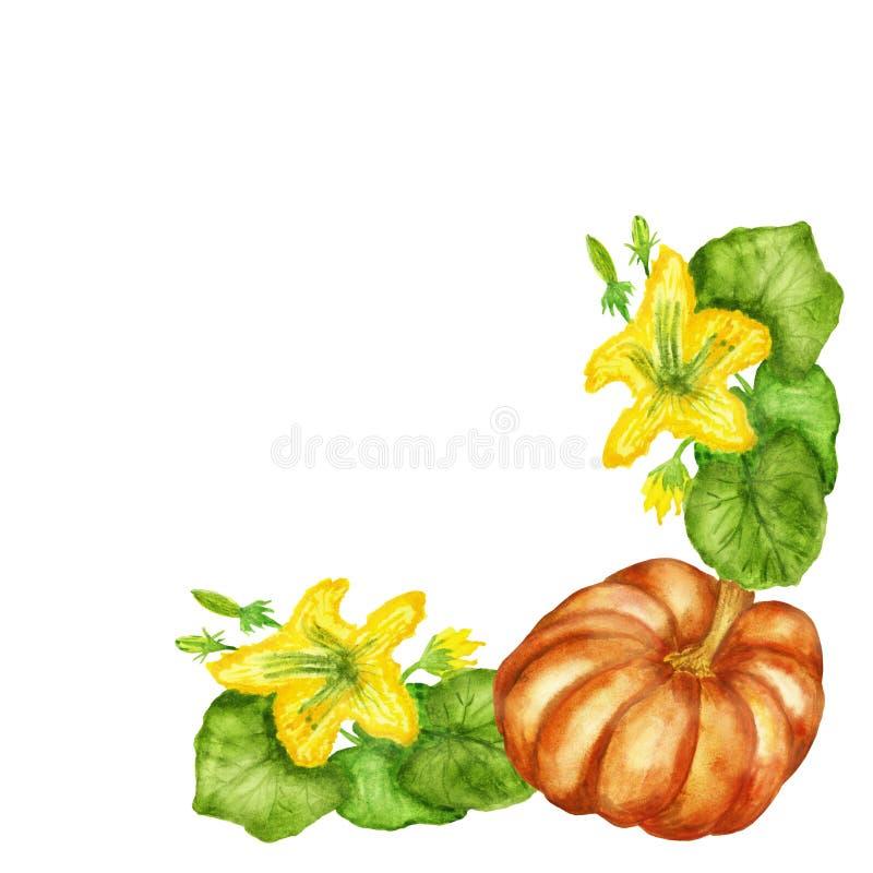 Απεικονίσεις Watercolor, ανθίζοντας κολοκύθα Μπους με τα φρούτα κολοκύθας που απομονώνεται στο άσπρο υπόβαθρο διανυσματική απεικόνιση