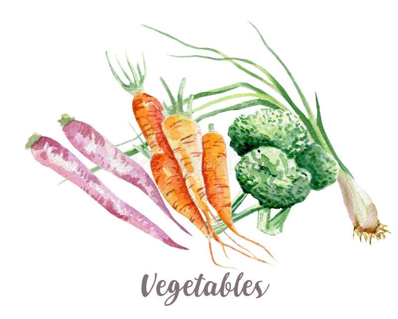 Απεικόνιση λαχανικών Συρμένο χέρι watercolor στο άσπρο υπόβαθρο ελεύθερη απεικόνιση δικαιώματος