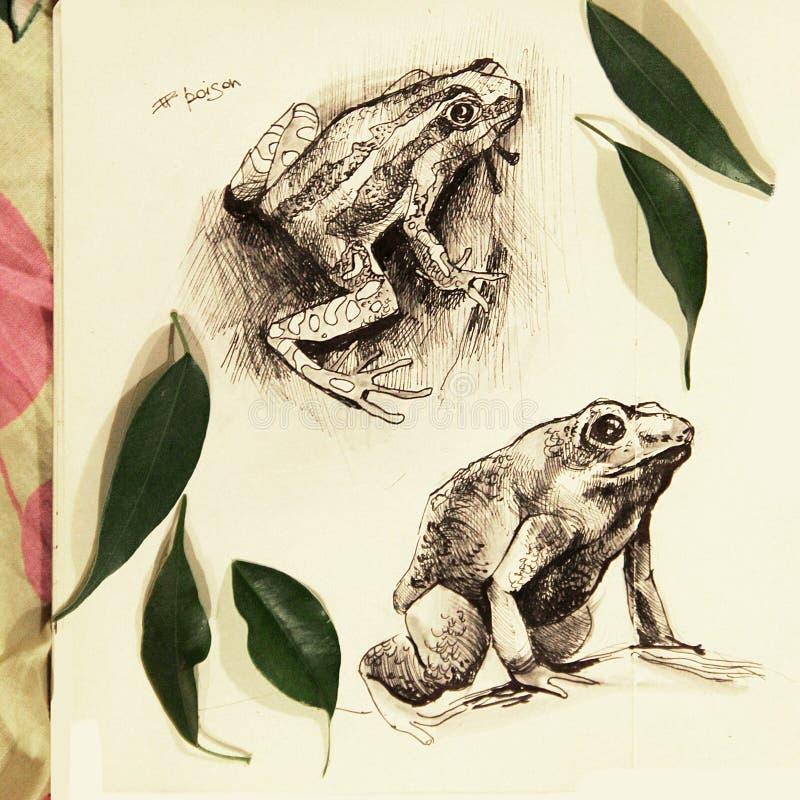 Απεικόνιση δύο βατράχων που σύρονται στο μολύβι διανυσματική απεικόνιση