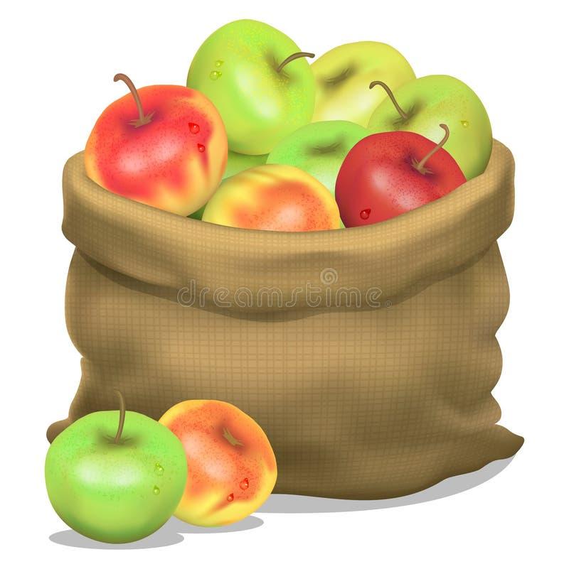 Απεικόνιση ενός σάκου των μήλων σε ένα άσπρο υπόβαθρο διάνυσμα ελεύθερη απεικόνιση δικαιώματος