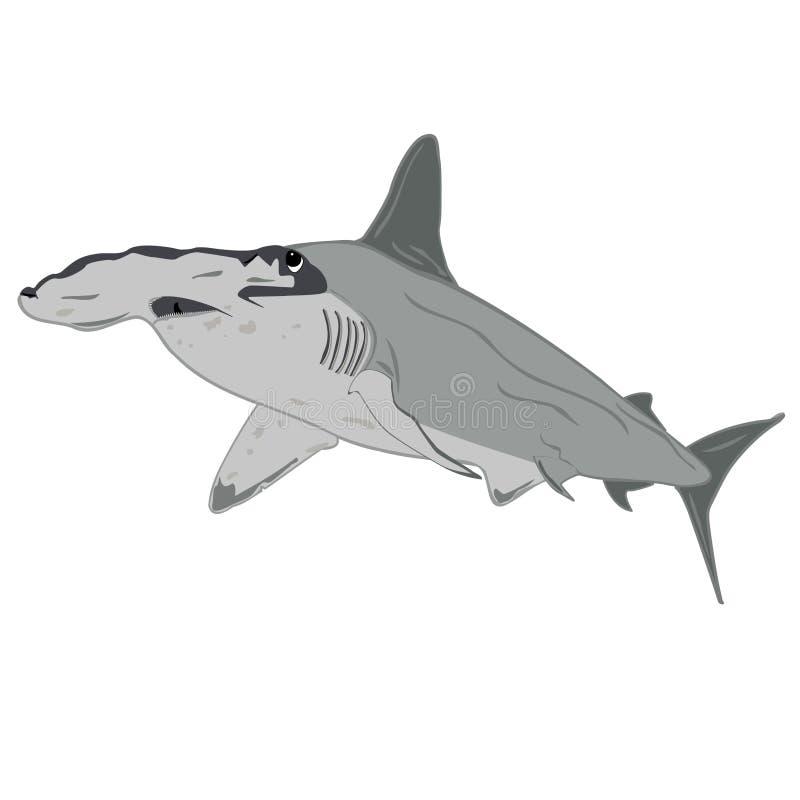 Απεικόνιση καρχαριών Hammerhead διανυσματική απεικόνιση