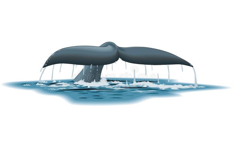 Απεικόνιση ουρών φαλαινών απεικόνιση αποθεμάτων