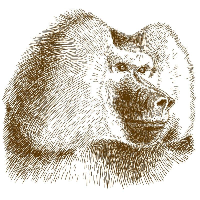 Απεικόνιση σχεδίων χάραξης baboon του κεφαλιού ελεύθερη απεικόνιση δικαιώματος