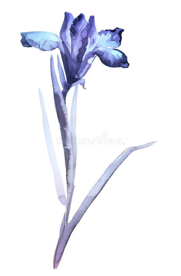 Απεικόνιση της ίριδας Ύφος sumi-ε, που χρωματίζεται με τα μπλε χρώματα απεικόνιση αποθεμάτων