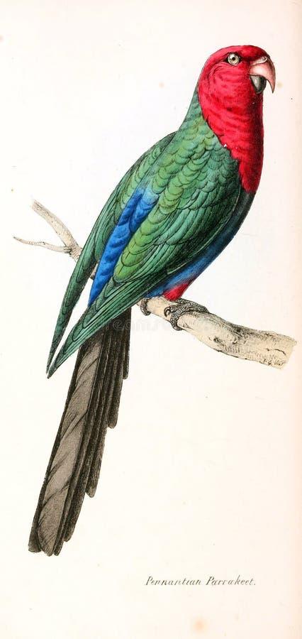 Απεικόνιση του ζώου διανυσματική απεικόνιση