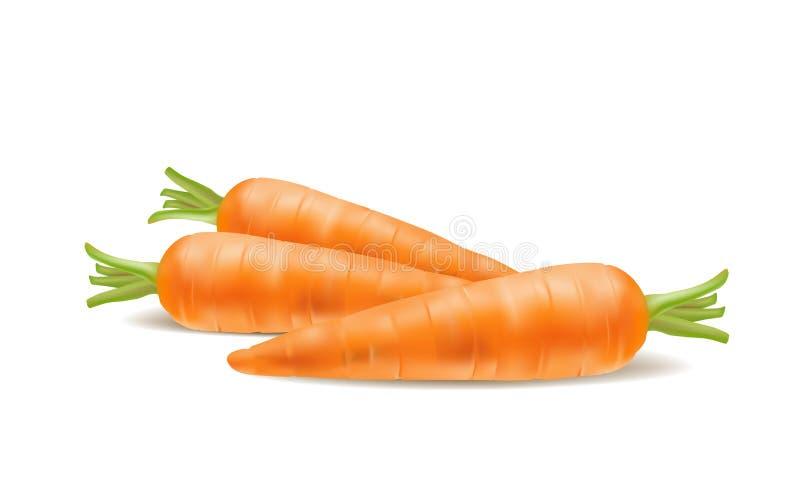 Απεικόνιση του φρέσκου καρότου στο άσπρο υπόβαθρο ελεύθερη απεικόνιση δικαιώματος
