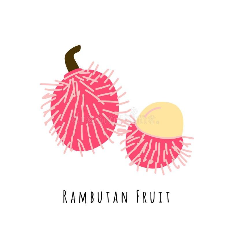 Απεικόνιση φρούτων Rambutan ελεύθερη απεικόνιση δικαιώματος