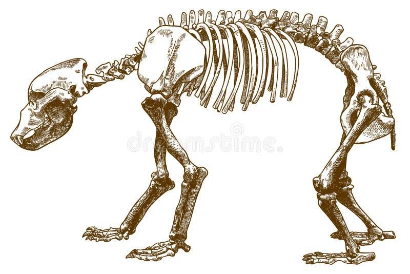 Απεικόνιση χάραξης του σκελετού αρκούδων ελεύθερη απεικόνιση δικαιώματος