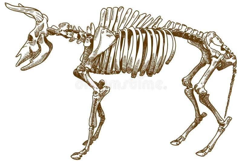 Απεικόνιση χάραξης των aurochs διανυσματική απεικόνιση
