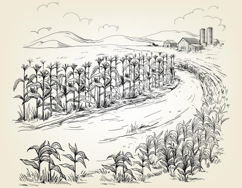 Απεικόνιση cornfield του σκίτσου μίσχων σιταριού απεικόνιση αποθεμάτων