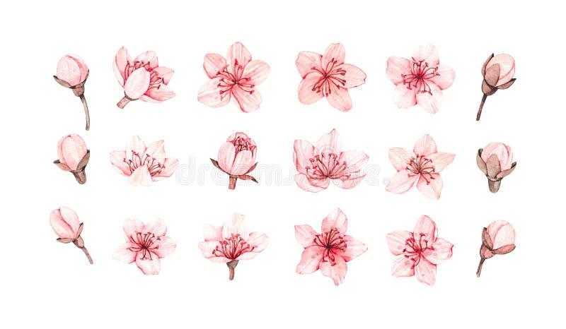 Απεικόνιση watercolor άνοιξη E r Βοτανικά ρόδινα λουλούδια Floral στοιχεία ανθών Τελειοποιήστε για το γάμο στοκ φωτογραφία με δικαίωμα ελεύθερης χρήσης