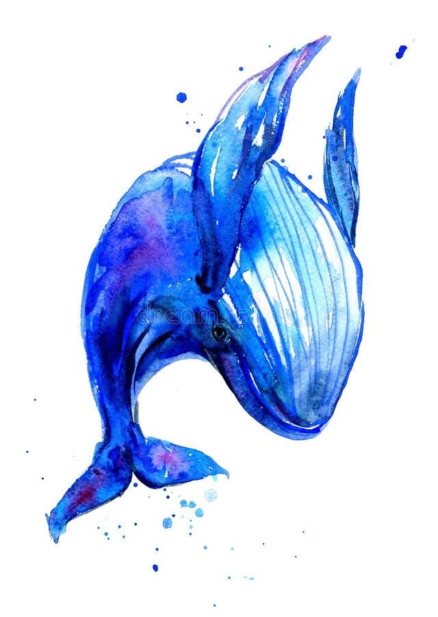 Απεικόνιση watercolor γαλάζιων φαλαινών Humpback Υποβρύχια πανίδα ελεύθερη απεικόνιση δικαιώματος